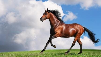 Pesquisa com Equinos  - Novo Ensaio para Resposta Imune